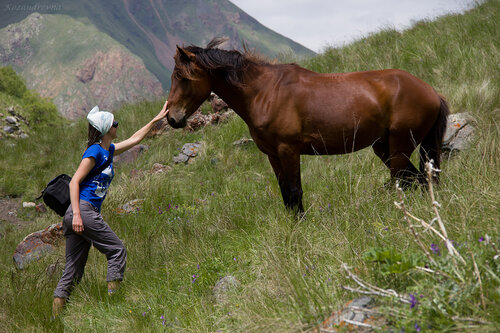 - Привет, коняшка!