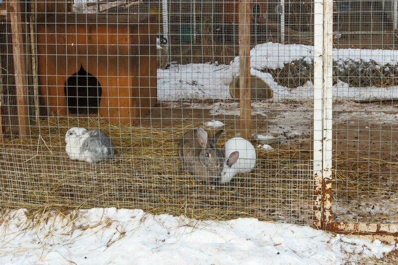 Кролики в монастырском зверинце