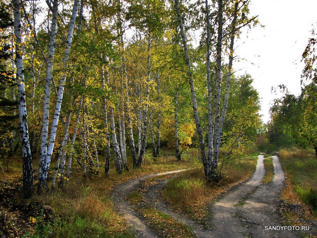 Цвета осеннего леса в Троицке #3