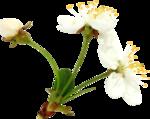 Весенний сад (11).jpg
