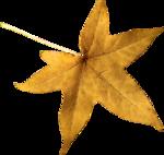 ial_sh_sf_leaf3.png