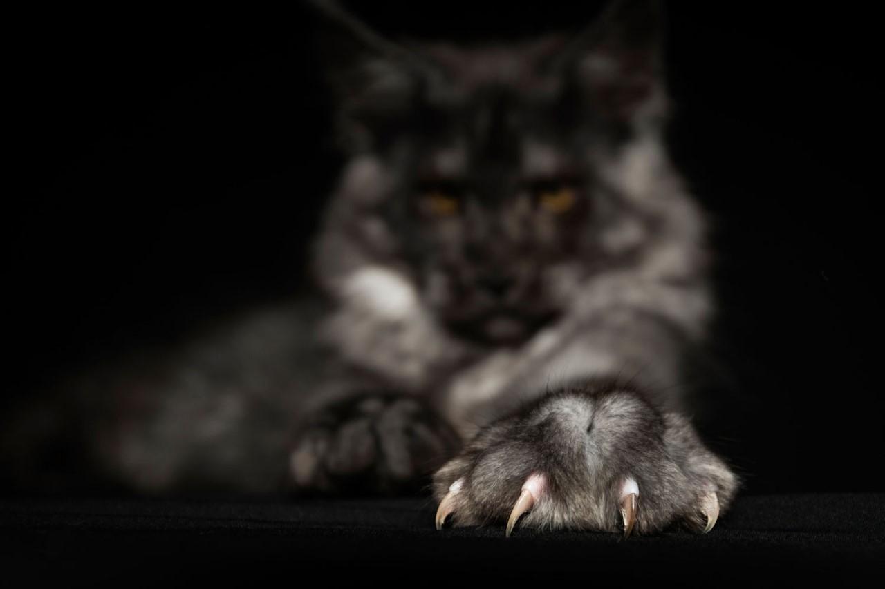 Мультфильм про анжелу кошку