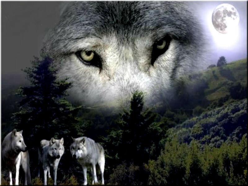 Про болезнь, волки с надписями картинки