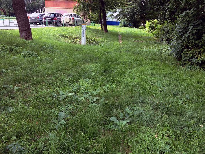 трава у дома.jpg