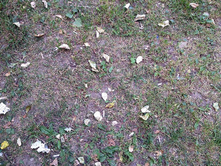 этот газон стригутс регулярностью.jpg