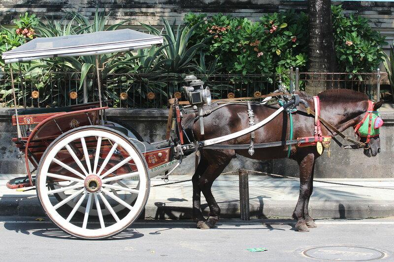 Живность на Бали