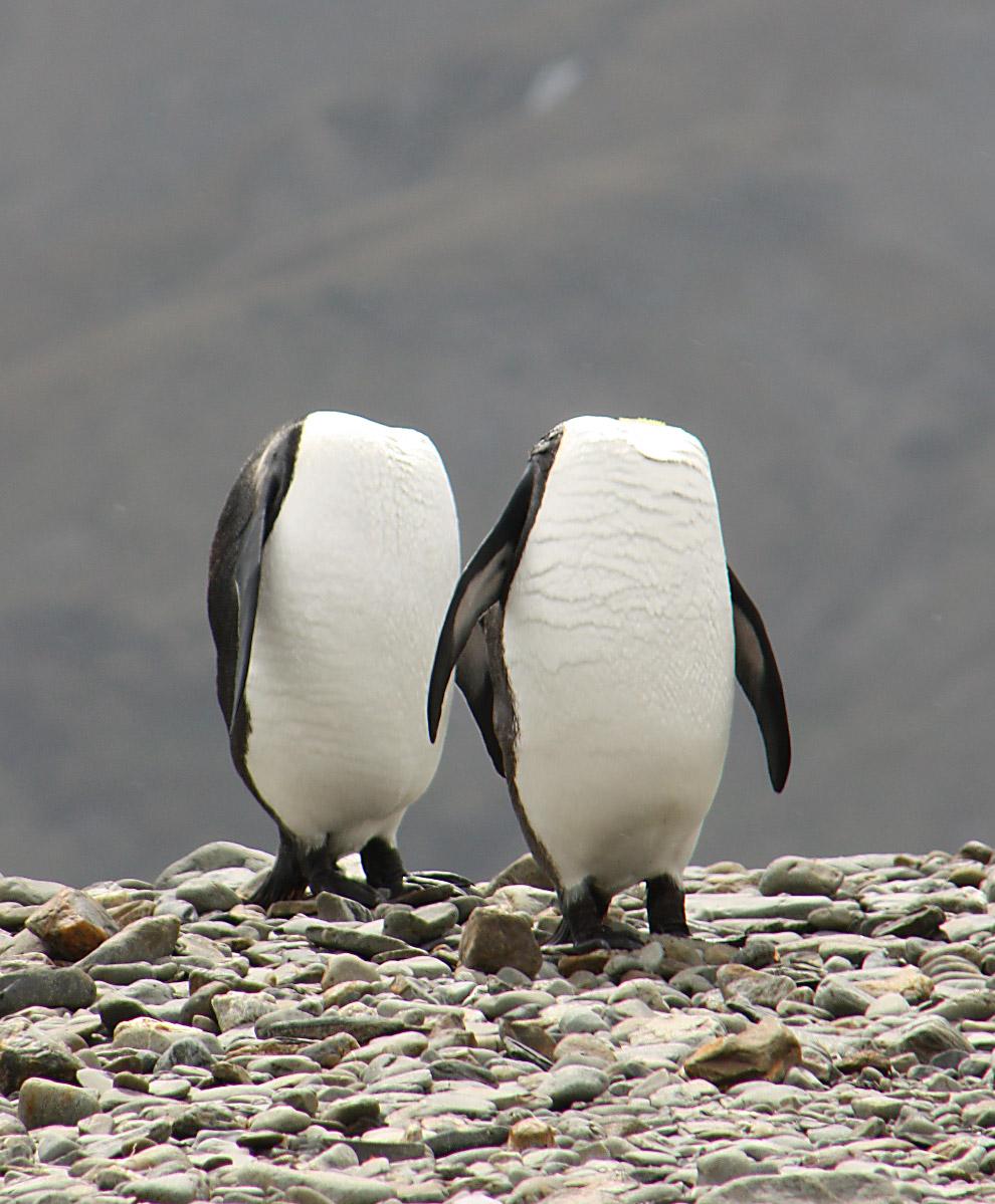 9. Модель. (Фото James Sharp   Barcroft Images   Comedy Wildlife Photo Awards):