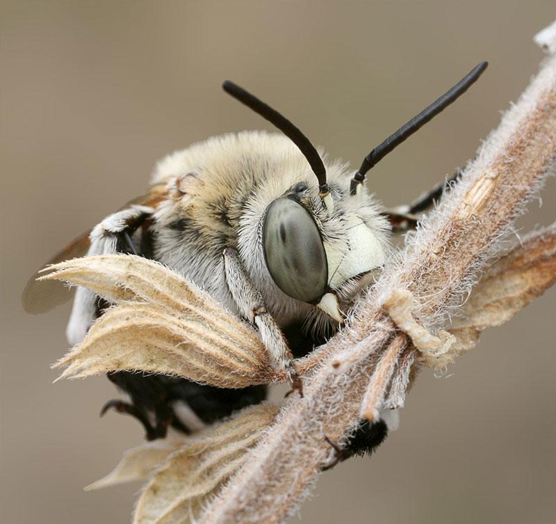 Как спят пчелы? Фотограф Станислав Шинкаренко