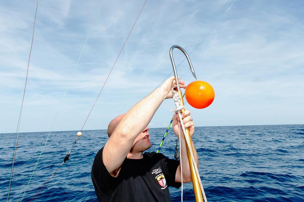 Ловись, рыбка большая: красота и жуть чемпионата по ловле монструозных акул