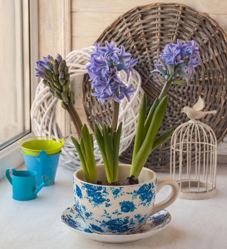 Супницы не только для супа Обычные миски для супа могут пригодиться в вашем маленьком садовом проект