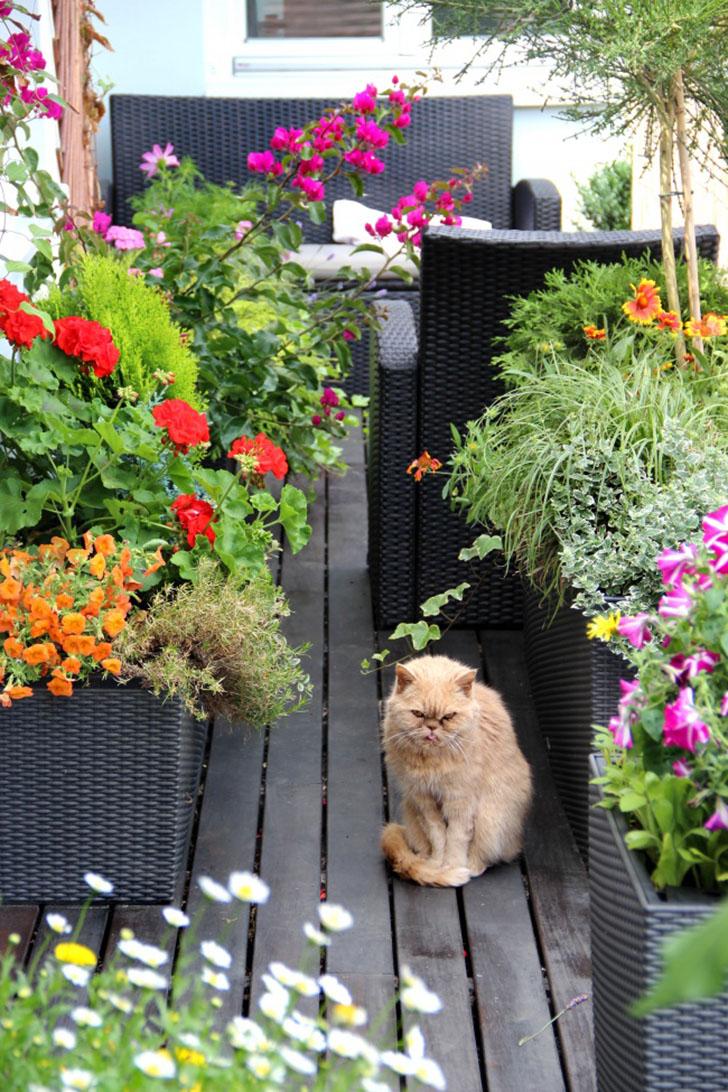 Лучшая декорация для сада Можете представить себе сад на балконе без любимого питомца? Кошки просто