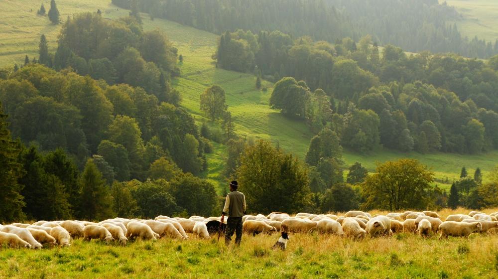 Овечья ферма Sheepworld.