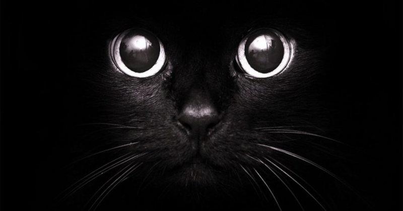 Нельзя фотографировать черных кошек . Да, кошки очищают энергетику дома. Они наши друзья и очень ми