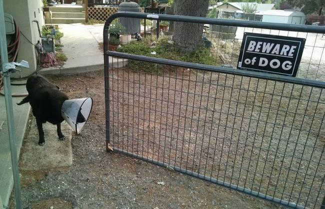 © stainlessnick   Авот этот пес особо опасен— залижет досмерти