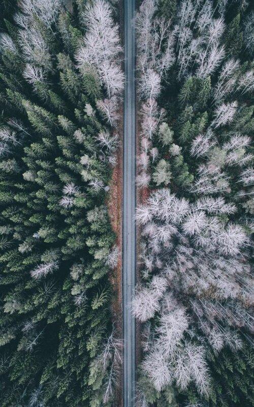 Национальный парк Фернебуфьерден. На снимках Тобиаса встречаются дороги, проходящие через древние леса.