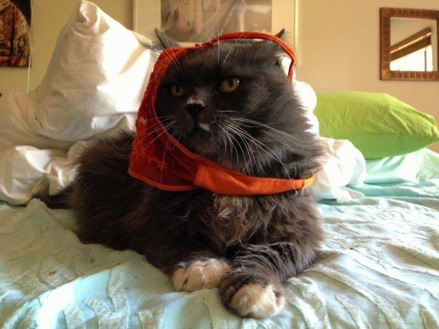Пушистые Чужие: ваш кот пришелец из космоса