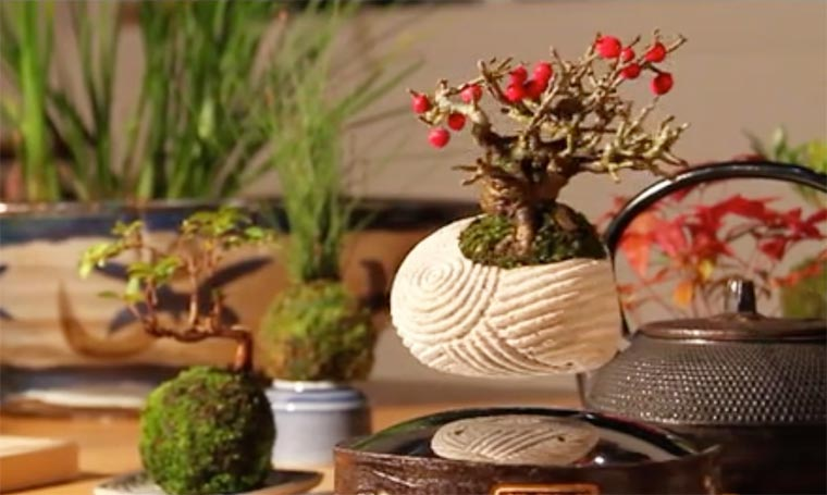 Air Bonsai - These amazing levitating bonsai are defying gravity