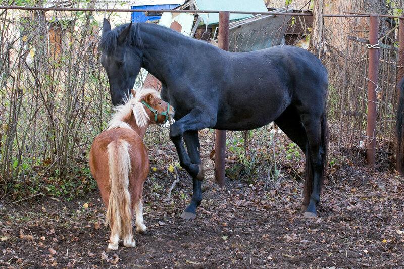 Осенние лошади