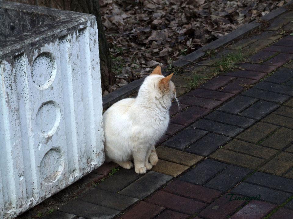 коты-6.jpg