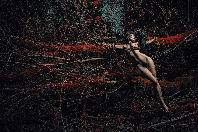 работы дизайнера и фотографа Stefan Gesell