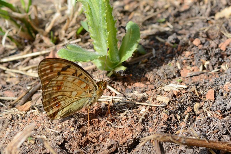 бабочки в полдень 6.jpg