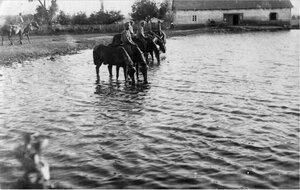 Кони на водопое