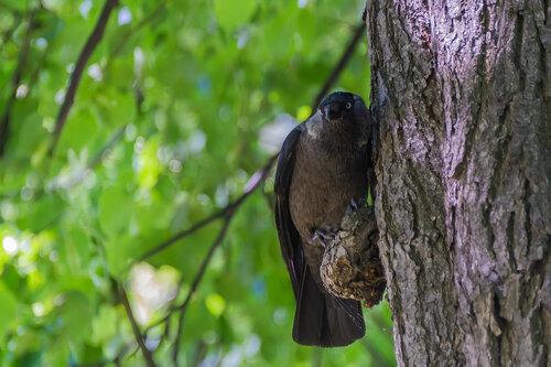 Внимательный птиц