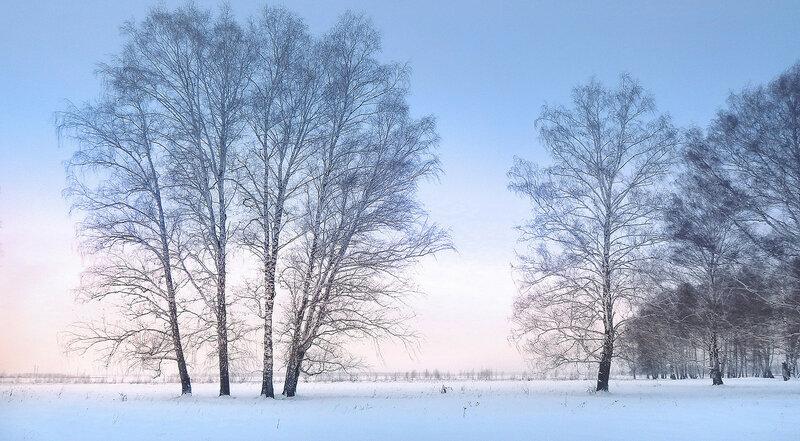 Ишимская лесостепь