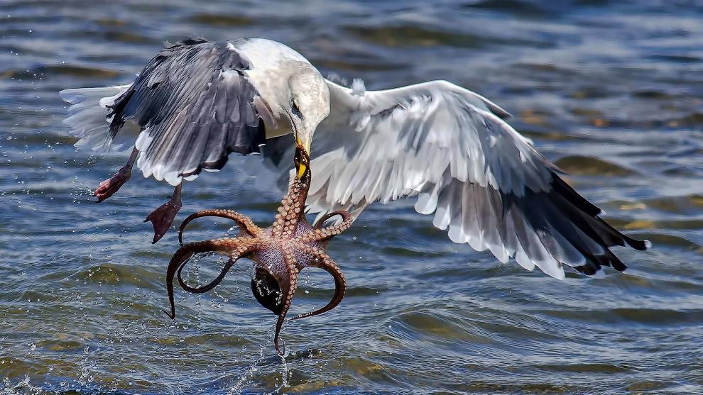 15. Чего не сделаешь ради хорошего снимка. Фотография сделана в Мексиканском заливе. (Фото Eli