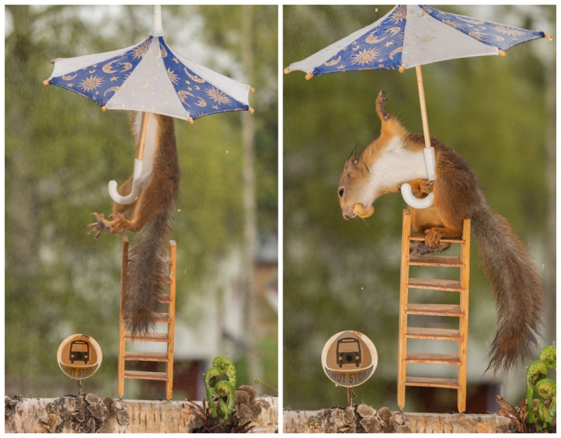 © Geert Weggen/Solent News/REX/Shutterstock   «Ловить удачный кадр порой приходится днями..