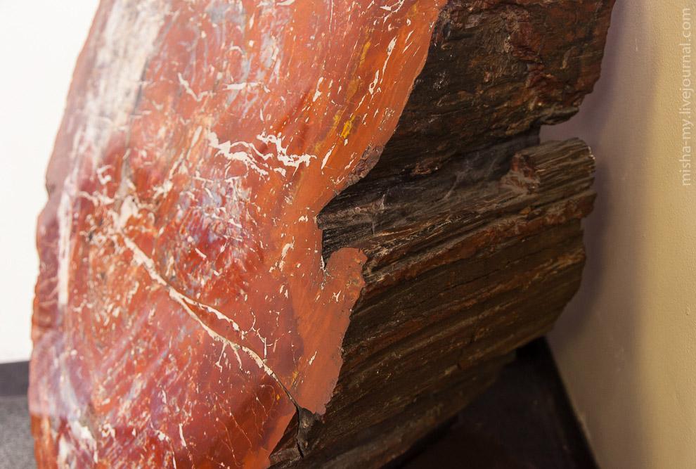 3. Окаменелые деревья валяются повсюду, сразу у выхода из центра. Тропа Giant logs короткая, вс