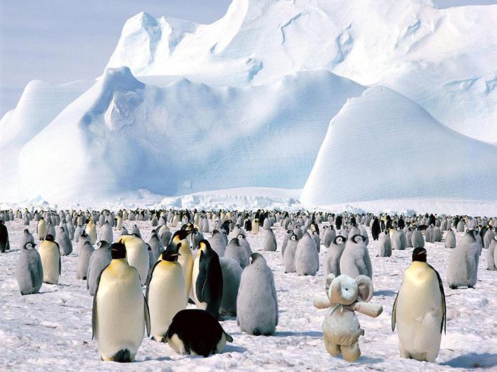 Заглянуть в Антарктику.