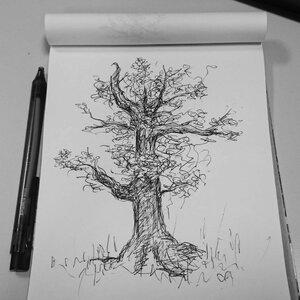 1tree.jpg