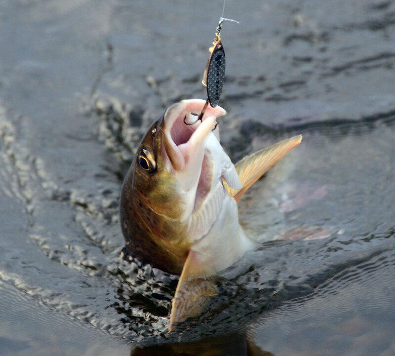 рыба3.jpg