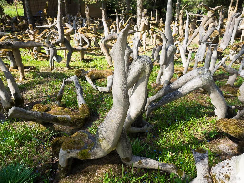 Сумасшедший лес