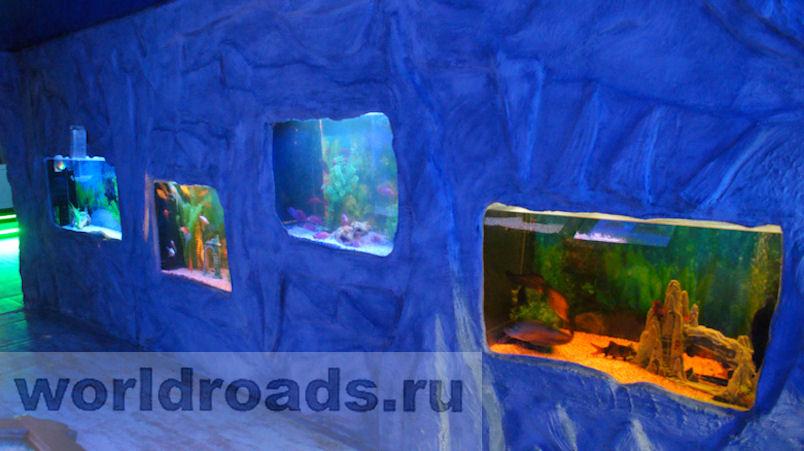 Океанариум в Архипо-Осиповке отзыв