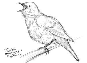 Как-нарисовать-соловья-карандашом-поэтапно-3.jpg