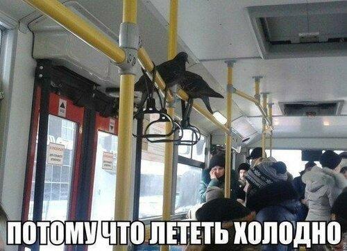 https://img-fotki.yandex.ru/get/50455/194408087.14/0_142e5d_eceae2e0_L.jpg