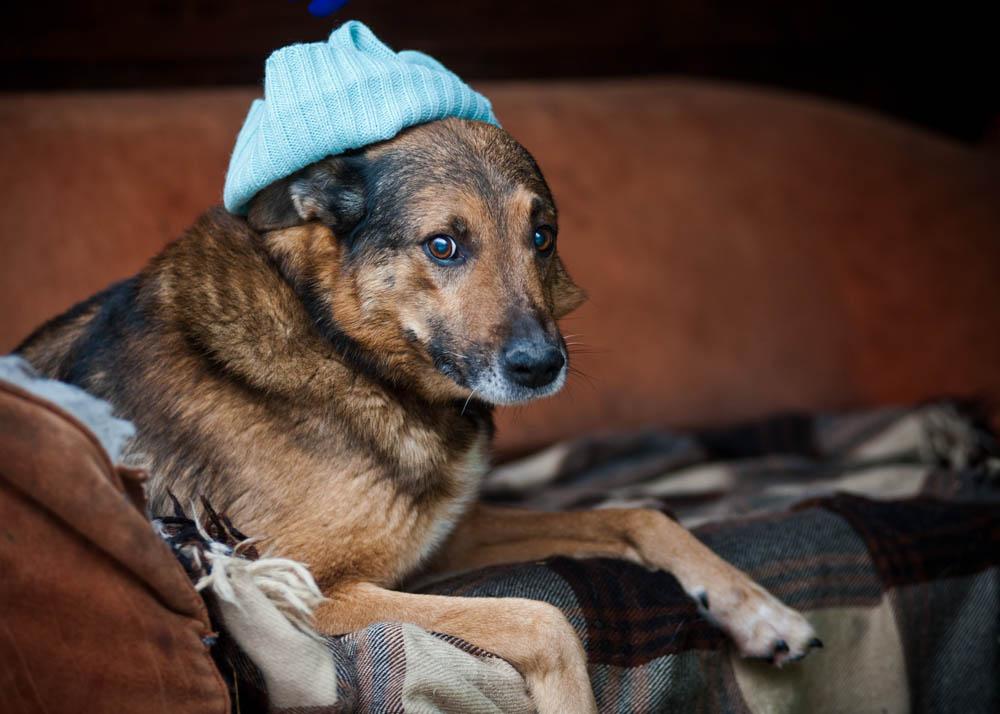Макс собака из приюта догпорт