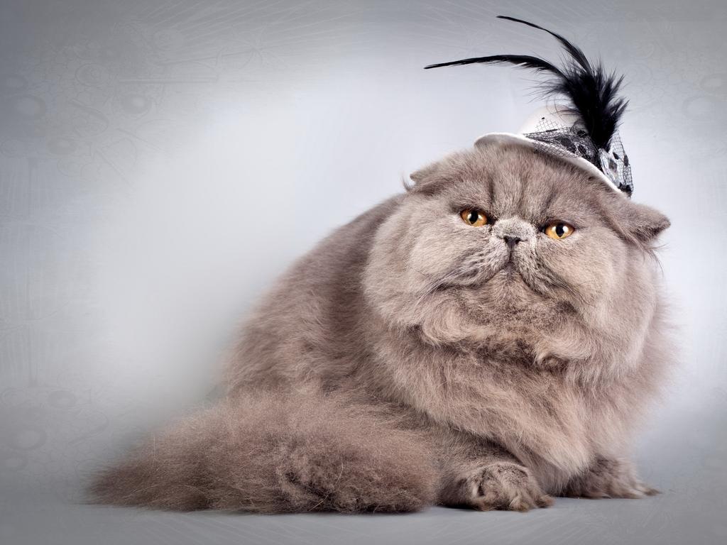 2. Кошка пушистая везде, а не только на голове.