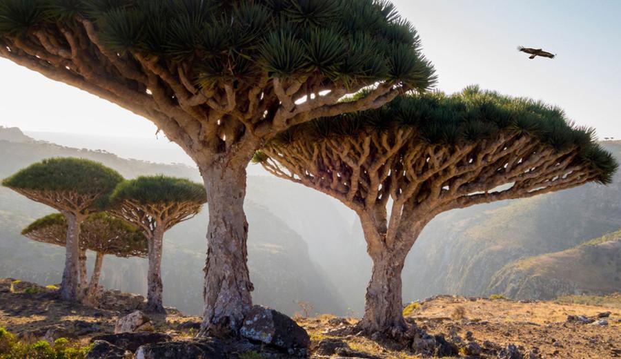 7. Архипелаг Сокотра, Йемен Этот архипелаг считается одним из самых изолированных в мире. Находится