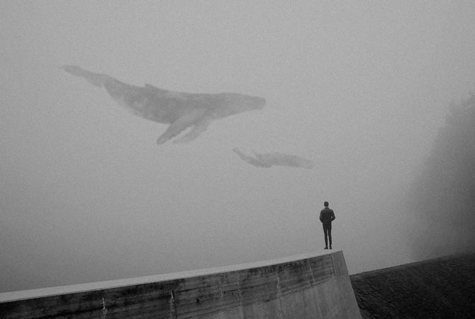 Милиция задержала администраторов «групп смерти»— Синие киты