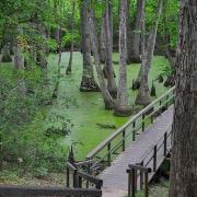 Мост через болото