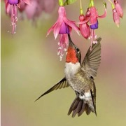 птица и цветок