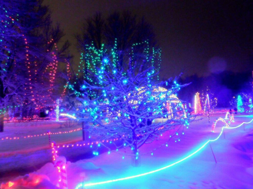 Волшебство Рождественских огней.