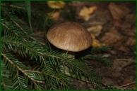 http://img-fotki.yandex.ru/get/50526/15842935.38c/0_eb363_2dfca795_orig.jpg