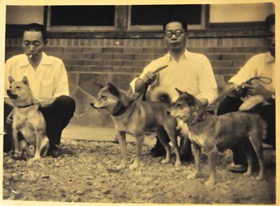 8 августа 1951 Сиба.jpg