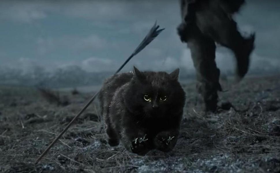 Неуязвимый для стрел кот.