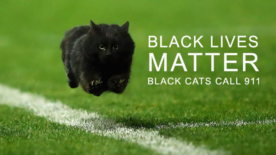 Жизни черных имеют значение. Черные коты, позвоните по номеру 911.