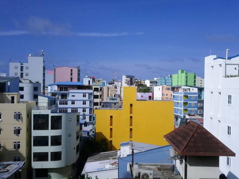 На Мальдивах очень богатый живой мир. При этом нет опасных животных или ядовитых рептилий. Также нет